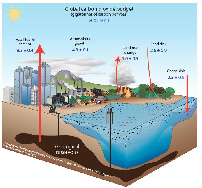 what is the carbon cycle? what is the science behind it? united Carbon Sinks List by Size